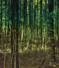 Nisso-Studios-Fine_Art-Prints-For-Sale-Savannah-Trees-Landscape-2955