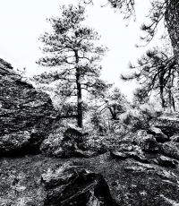 Nisso-Studios-Fine_Art-Prints-For-Sale-Wyoming-Yellowstone-National-Park-Trees-Landscape-1065