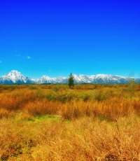 Nisso-Studios-Fine_Art-Prints-For-Sale-Wyoming-Yellowstone-National-Park-Trees-Landscape-Mountain-1415