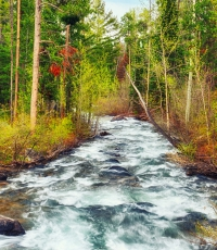 Nisso-Studios-Fine_Art-Prints-For-Sale-Wyoming-Yellowstone-National-Park-Trees-Landscape-River-1198