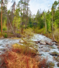 Nisso-Studios-Fine_Art-Prints-For-Sale-Wyoming-Yellowstone-National-Park-Trees-Landscape-River-1205