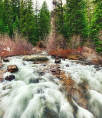 Nisso-Studios-Fine_Art-Prints-For-Sale-Wyoming-Yellowstone-National-Park-Trees-Landscape-River-1289