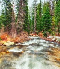 Nisso-Studios-Fine_Art-Prints-For-Sale-Wyoming-Yellowstone-National-Park-Trees-Landscape-River-129