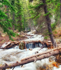 Nisso-Studios-Fine_Art-Prints-For-Sale-Wyoming-Yellowstone-National-Park-Trees-Landscape-River-130