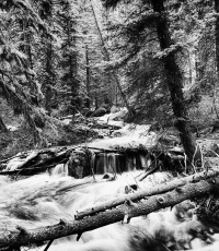 Nisso-Studios-Fine_Art-Prints-For-Sale-Wyoming-Yellowstone-National-Park-Trees-Landscape-River-1303